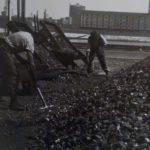 1939. Banchina Veneto del porto commerciale, operai spalano carbone.